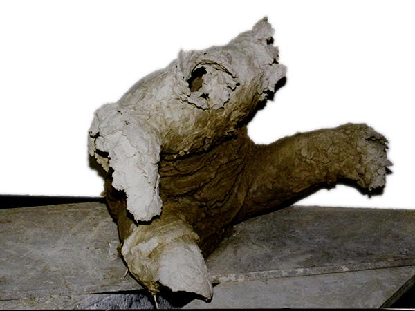 grisciuc-vitalie-ipostaze-umane-2