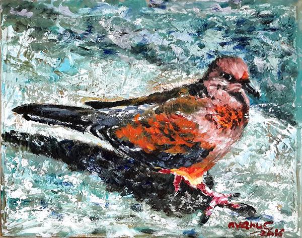 Porumbel in apa - avanu cerasela