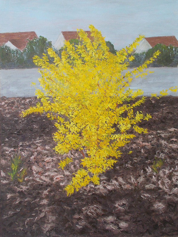 7 Yellow Forsythia