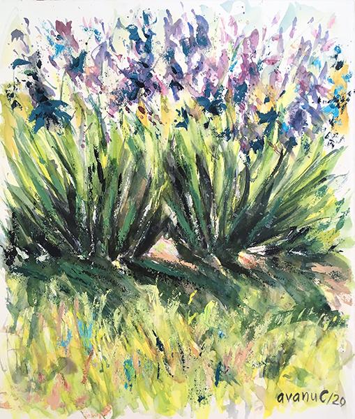 Irisii mamei - cod: CAVA0110